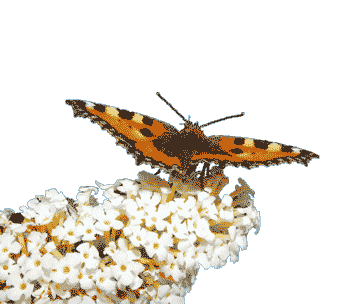 Flügel verleihen bei Arbeite mit mir: Foto von Schmetterling